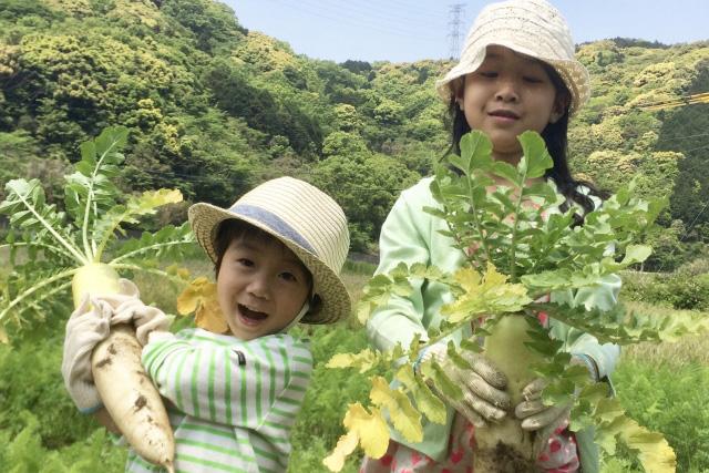 収穫する子供